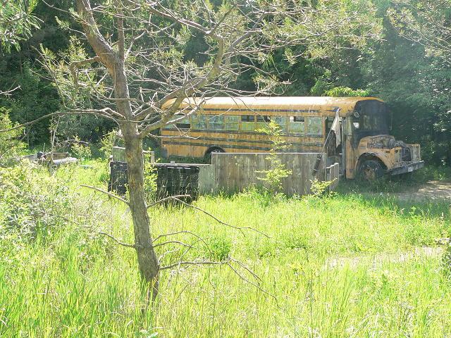 Main Page Bus